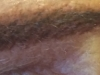 After removal of most of red ink, and new tattoo color applied, to make a new brow with a look of real hair. 1045